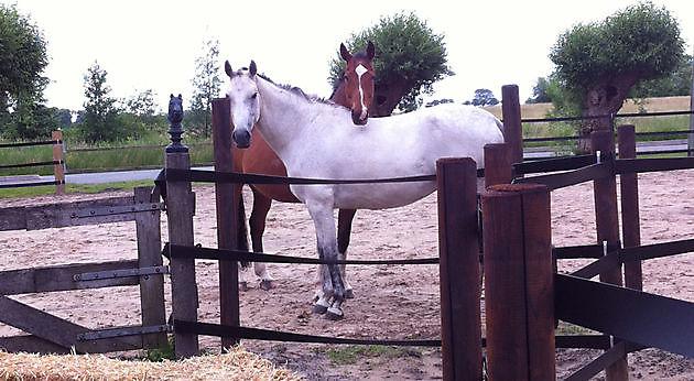 Coaching met paard - Praktijk PrimaVera Finsterwolde